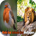 Download Birds And Animals Live Wallpapers APK